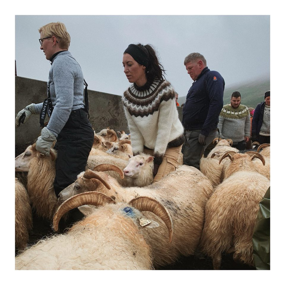 Cait Bagby in a Lopapeysa Sweater sorting sheep in Iceland at the annual Rettir. Discussing how the HandKnitting Association is paving the way for ethical clothing around the world.