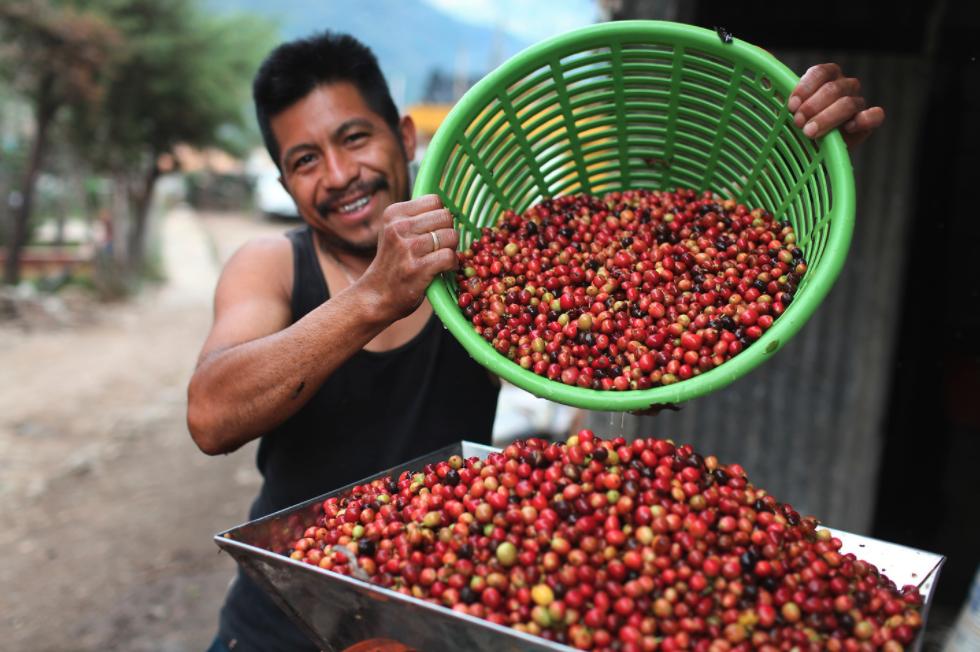 Fair Trade USA Peruvian Coffee Farmer
