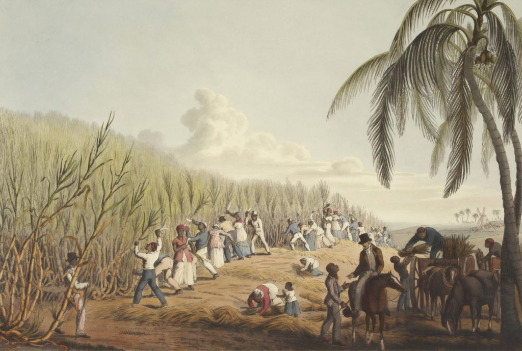 Historical painting of slaves working on a sugar cane plantation. Possible bondage labor